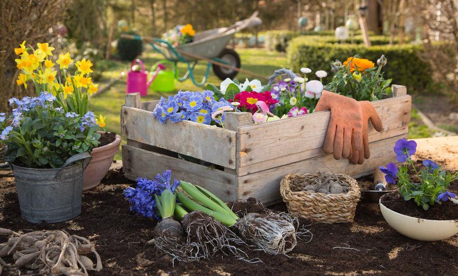 virágültetés a kertben tavasszal